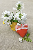 Bouquet of white phloxes and heart on a canvas background — Stock Photo
