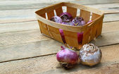 Small basket with the bulbs of hyacinths on a table — Stock Photo