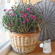 Lilac chrysanthemum in a basket — Stock Photo