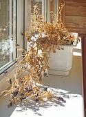 Droogbeurten omhoog zonder drenken bloemen — Stockfoto