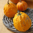 Decorative pumpkins — Stock Photo