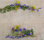 Gentian and tansy a frame. — Stock Photo