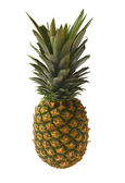 Ananas-frucht — Stockfoto