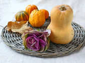 Head of ornamental cabbage and pumpkins — Stock Photo