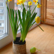 Narcissuses and easter eggs on a window — Stock Photo