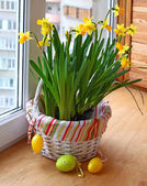 Basket with daffodils and easter eggs — Stock Photo