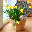 Stock Photo: Basket with daffodils on the balcony window.