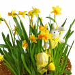 Tender narcissuses and easter decor on a white background — Stock Photo