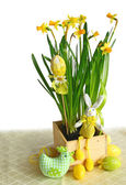 Narcissuses with an easters decors on a white background are iso — Stock Photo