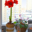 Homeflowers on a window in winter with candlesticks — Stock Photo