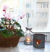 Pink cyclamen on a window in winter with candlesticks — Stok fotoğraf