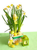 Narcissus with an easters happy rabbit and egg — Stock Photo