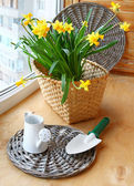 Narcissus and watering can with a shovel — Stock Photo