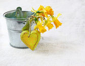 Delicate bouquet of daffodils in a small bucket — Stock Photo