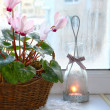 Pink cyclamen on a window in winter with vintage candlestick - Stock Photo