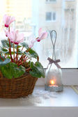 Pink cyclamen on a window in winter with vintage candlestick — Stock Photo