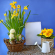 Spring flowers hyacinth, daffodil, primula on a background the c — Stock Photo