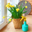 Basket with daffodils and sprayer on the balcony window. - Stock Photo