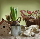 Vintage still life with hyacinth and decorative birdhouses — Stock Photo