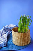 Blue muscari in a basket — Stock Photo