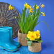 Blue rubber gumboots and spring flowers  in basket — Stock Photo