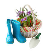 Child's little blue rubber gumboots with a shovel and crocus in — Stock Photo