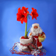 Stock Photo: New-year still life with red hippeastrum and SantClaus
