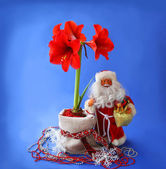 New-year still life with red hippeastrum and Santa Claus — Stok fotoğraf