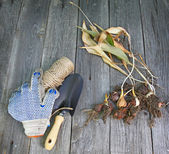 Garden shovel, gloves and dug dry tulips on the old wooden table — Stock Photo