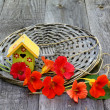 Summer still-life with flowers nasturtium on a wooden table — Stock Photo