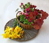 Basket with geyheroy, pansies, daisies — Stock Photo