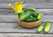 Fresh cucumbers in a wooden bowl — Stock Photo