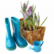 Basket with crocuses and gumboots on a white background — Stock Photo