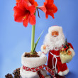 Stock Photo: New-year still life with red amaryllis and toy SantClaus