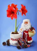 New-year still life with red amaryllis and toy Santa Claus — Stock Photo