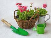 购物篮和绿色喷壶中铲粉色雏菊 — 图库照片