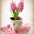 Retro style stylized composition with hyacinth — Stock Photo