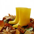 Two yellow gumboots standing in fallen  leaves — Stock Photo