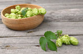 A branch of hops — Stock Photo