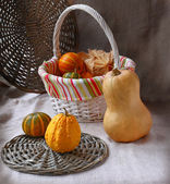 Harvest of pumpkins on a background a canvas — Stock Photo