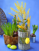 Easter still life with mimosa, narcissus and muscari — Stok fotoğraf