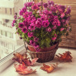 Violet chrysanthemum in a basket — Stock Photo #36833617