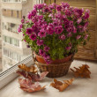 Violet chrysanthemum in a basket — Stock Photo