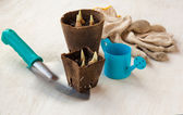 Spring still life with peat pots and gardening gloves — Stock Photo