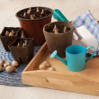 Stock Photo: Spring still life with peat pots and bulbs