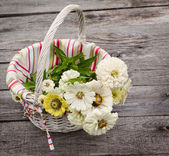 Bouquet of white zinnia — Stock Photo