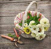 Bouquet of white zinnia in a white basket — Stock Photo