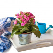 Stock Photo: Blooming Kalanchoe