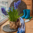 Hyacinths and muscari in basket — Stock Photo