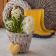 White hyacinths in a basket and heart — Foto Stock